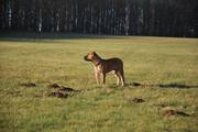 Landscape-Boerboels.com